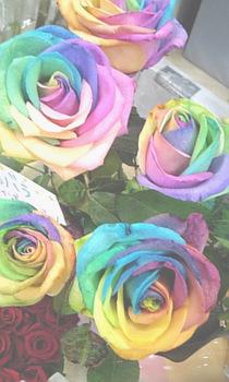 虹色のばら.jpg